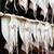 hanging squid for dehydration stock photo © leungchopan