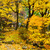 Forest in autumn stock photo © leungchopan