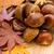 Chestnut in autumn stock photo © leungchopan
