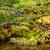 озеро · джунгли · Blue · Sky · облака · лес · пейзаж - Сток-фото © leungchopan