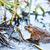 лягушка · завода · дерево · природы · зеленый · животного - Сток-фото © leungchopan