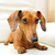 такса · собака · диван · белый · коричневый · млекопитающее - Сток-фото © leungchopan