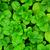 抽象的な · 緑 · 小さな · 樺 · 春 · 自然 - ストックフォト © leungchopan
