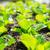 campo · serra · crescita · verdura · coperto · plastica - foto d'archivio © leungchopan