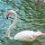 ワニ · 泳ぐ · 池 · 熱帯 · 動物園 · 眼 - ストックフォト © leungchopan