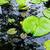 liliom · lebeg · víz · alatt · kert · nyár - stock fotó © leungchopan