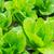 салата · области · продовольствие · лет · зеленый - Сток-фото © leungchopan