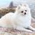 beyaz · köpek · arka · plan · genç · eğitim · stüdyo - stok fotoğraf © leungchopan