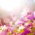 daisy under sunlight stock photo © leungchopan