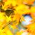 Yellow maple in autumn  stock photo © leungchopan