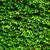 bluszcz · ściany · zielone · oddziału · szary - zdjęcia stock © leungchopan