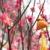 geleneksel · sarı · kırmızı · şeftali · nesneler · makro - stok fotoğraf © leungchopan