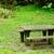 ピクニック · 場所 · 森林 · ツリー · 太陽 · 自然 - ストックフォト © leungchopan
