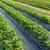 ahır · çiftlik · alan · yaz · derin · mavi · gökyüzü - stok fotoğraf © leungchopan