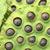 lotus · zaad · peul · geneeskunde · zwarte · plant - stockfoto © leungchopan