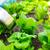 Fertilization of lettuce stock photo © leungchopan