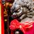 altın · aslan · doğa · manzara · portre · maymun - stok fotoğraf © leungchopan