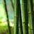 bamboe · bos · detail · groene - stockfoto © leungchopan