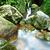 água · primavera · selva · árvore · floresta · sol - foto stock © leungchopan