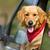 köpek · bakıyor · dışarı · araba · pencere · güzel - stok fotoğraf © leventegyori