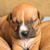 かわいい · 子犬 · 画像 · 1 · 月 · 古い - ストックフォト © leventegyori