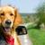 golden · retriever · bakıyor · dışarı · araba · pencere · aile - stok fotoğraf © leventegyori