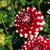 witte · dahlia · bloemen · liefde · schoonheid · kleur - stockfoto © lianem