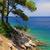 çam · ağacı · plaj · Hırvatistan · su · doğa · deniz - stok fotoğraf © lianem