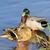 мужчины · крыльями · пруд · воды · красоту · зеленый - Сток-фото © lianem
