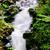 rossz · vízesés · fa · tájkép · zöld · folyó - stock fotó © lianem