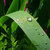 yaprak · su · doku · doğa · yeşil - stok fotoğraf © lianem