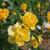 flor · pormenor · vermelho · natureza · planta · flor - foto stock © lianem