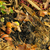 compost pile 11 stock photo © lianem
