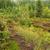 mocsár · fa · természet · hegy · zöld · domb - stock fotó © lianem