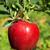 grünen · Apfel · Oma · frische · Lebensmittel · Obst · produzieren - stock foto © lianem