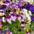 bloemen · tuin · voorjaar · natuur · blad · groene - stockfoto © lianem