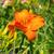 оранжевый · цветок · текстуры · весны · красоту · красивой - Сток-фото © lianem