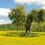 korka · dąb · drzewo · drewna · krajobraz · Europie - zdjęcia stock © lianem