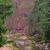 cachoeira · montanhas · sudoeste · Polônia · europa · árvore - foto stock © lianem