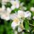 hermosa · flores · flor · hoja · jardín · verano - foto stock © lianem