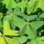quatro · trevo · fresco · planta · grama - foto stock © lianem