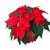 foglie · fiore · primo · piano · top · rosso · albero - foto d'archivio © lianem