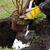 planting a shrub 11 stock photo © lianem