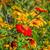 мексиканских · подсолнечника · небе · цветок · текстуры · пейзаж - Сток-фото © lianem