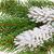 abete · rosso · ramoscello · inverno · isolato · bianco · neve - foto d'archivio © lianem