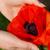 haşhaş · çiçek · bahar · bahçe · yeşil - stok fotoğraf © lianem