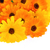 calendula 25 stock photo © lianem