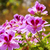 vermelho · jardim · flores · primavera · natureza · folha - foto stock © lianem