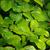 beech foliage 05 stock photo © lianem