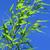 青 · 緑 · 竹 · 葉 · フレーム · 自然 - ストックフォト © lianem